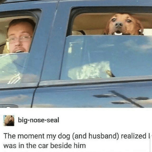 Dank, Seal, and Husband: big-nose-seal  The moment my dog (and husband) realized l  was in the car beside him