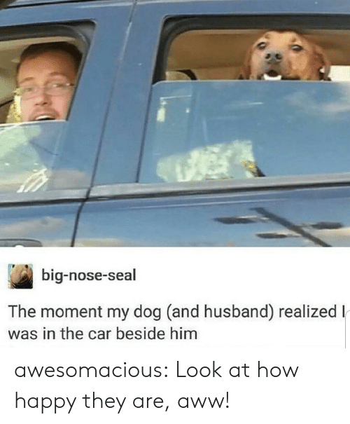 Aww, Tumblr, and Blog: big-nose-seal  The moment my dog (and husband) realizedl  was in the car beside him awesomacious:  Look at how happy they are, aww!