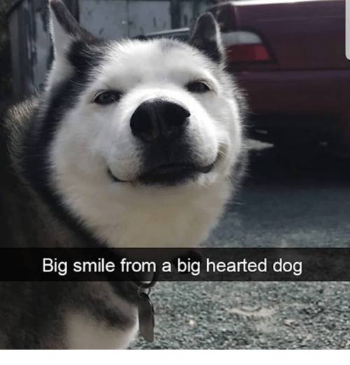 Memes, Smile, and 🤖: Big smile from a big hearted dog