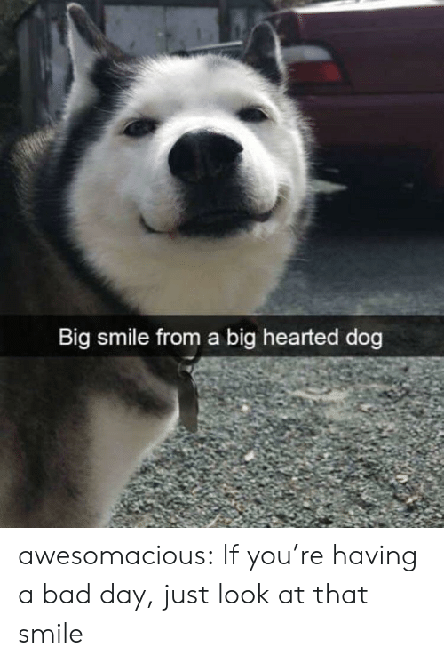 Just Look At That: Big smile from a big hearted dog awesomacious:  If you're having a bad day, just look at that smile
