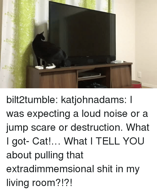 Scare, Shit, and Target: bilt2tumble: katjohnadams: I was expecting a loud noise or a jump scare or destruction. What I got-  Cat!… What I TELL YOU about pulling that extradimmemsional shit in my living room?!?!
