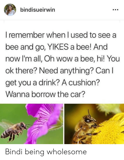 Wow, Wholesome, and Borrow: bindisueirwin  I remember when I used to see a  bee and go, YIKES a bee! And  now I'm all, Oh wow a bee, hi! You  ok there? Need anything? Can I  get you a drink? A cushion?  Wanna borrow the car? Bindi being wholesome