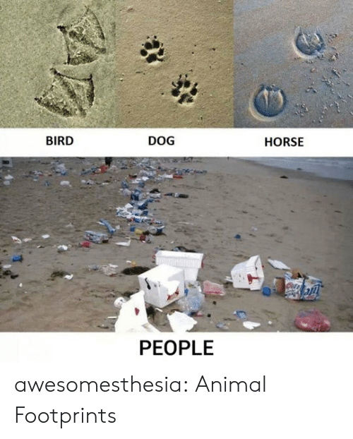 Tumblr, Animal, and Blog: BIRD  DOG  HORSE  PEOPLE awesomesthesia:  Animal Footprints