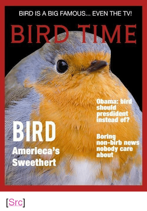 "News, Obama, and Reddit: BIRD IS A BIG FAMOUS... EVEN THE TV!  BIRD TIME  Obama: bird  should  presdident  instead of?  BIRD  Boring  non-birb news  nobody care  about  Amerieca's  Sweethert <p>[<a href=""https://www.reddit.com/r/surrealmemes/comments/8j3dkf/bird_fing_a_new_big_and_a_famous_collect_in/"">Src</a>]</p>"