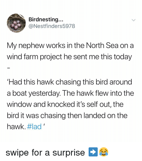 in-the-north: Birdnesting...  @Nestfinders5978  My nephew works in the North Sea on a  wind farm project he sent me this today  Had this hawk chasing this bird around  a boat yesterday. The hawk flew into the  window and knocked it's self out, the  bird it was chasing then landed on the  hawk. #lad , swipe for a surprise ➡️😂