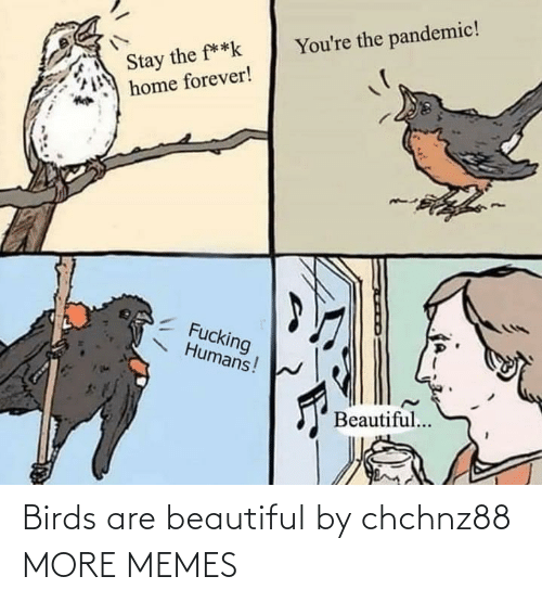 Birds: Birds are beautiful by chchnz88 MORE MEMES