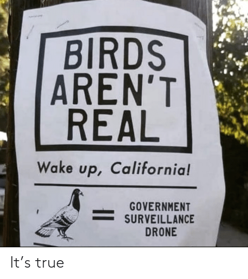 Government: BIRDS  AREN'T  REAL  Wake up, California!  GOVERNMENT  SURVEILLANCE  DRONE It's true