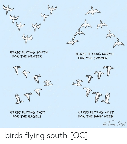 birds flying: BIRDS FLYING SOUTH  BIRDS FLYING NORTH  FOR THE WINTER  FOR THE SUMMER  BIRDS FLYING EAST  FOR THE BAGELS  BIRDS FLYING WEST  FOR THE DANK WEED birds flying south [OC]