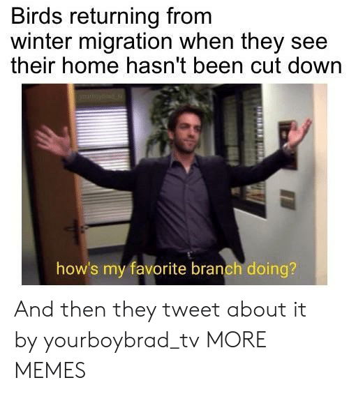 Dank, Memes, and Target: Birds returning from  winter migration when they see  their home hasn't been cut down  how's my favorite branch doing? And then they tweet about it by yourboybrad_tv MORE MEMES