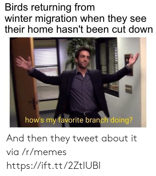 Memes, Winter, and Birds: Birds returning from  winter migration when they see  their home hasn't been cut down  how's my favorite branch doing? And then they tweet about it via /r/memes https://ift.tt/2ZtIUBl