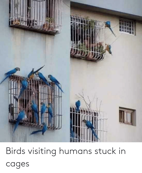 Birds: Birds visiting humans stuck in cages
