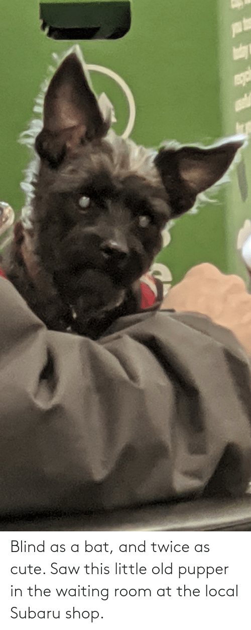 subaru: Blind as a bat, and twice as cute. Saw this little old pupper in the waiting room at the local Subaru shop.