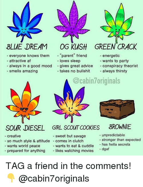 "Energetic: BLUE DREAM OG KUSH GREEN CRACK  everyone knows them  attractive af  always in a good mood  parent"" friend  loves sleep  energetic  wants to party  conspiracy theorist  always thirsty  gives great advice  - smells amazing  takes no bullshit  @cabin7originals  SOUR DIESEL GRL SCOUT COOKIES BROWNIE  unpredictable  stronger than expected  sweet but savage  creative  so much style & attitude comes in clutch  wants world peace  wants to eat & cuddle has hella secrets  likes watching movies  - dgaf  - prepared for anything TAG a friend in the comments! 👇 @cabin7originals"