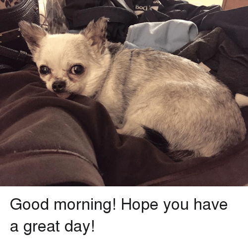 Boa Good Morning Hope You Have A Great Day Meme On