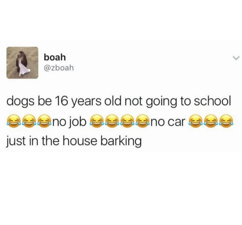 16 years old: boah  @zboah  dogs be 16 years old not going to school  just in the house barking