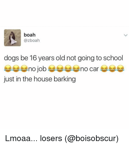 16 years old: boah  @zboah  dogs be 16 years old not going to school  just in the house barking Lmoaa... losers (@boisobscur)