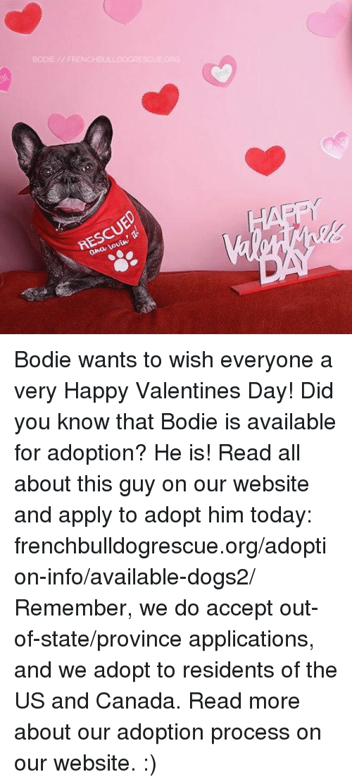 Applie: BODIE // FRENCHBU  RESCUED  ana Lovin, Bodie wants to wish everyone a very Happy Valentines Day!  Did you know that Bodie is available for adoption? He is! Read all about this guy on our website and apply to adopt him today: frenchbulldogrescue.org/adoption-info/available-dogs2/  Remember, we do accept out-of-state/province applications, and we adopt to residents of the US and Canada. Read more about our adoption process on our website. :)