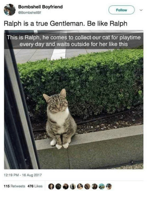 Be Like, True, and Boyfriend: Bombshell Boyfriend  @BombshellBf  Follow  Ralph is a true Gentleman. Be like Ralph  This is Ralph, he comes to collect our cat for playtime  every day and waits outside for her like this  12:19 PM-16 Aug 2017  115 Retweets 476 Likes  O.闷de ●為宽
