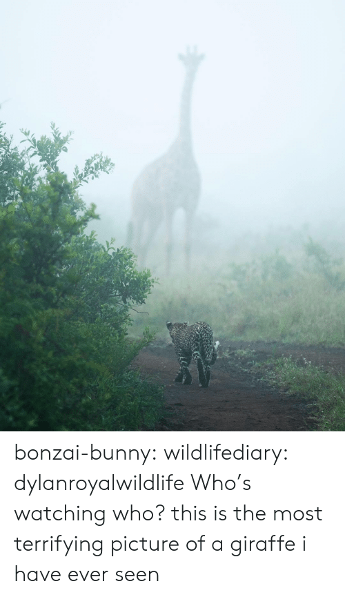 Giraffe: bonzai-bunny:  wildlifediary:  dylanroyalwildlife Who's watching who?    this is the most terrifying picture of a giraffe i have ever seen