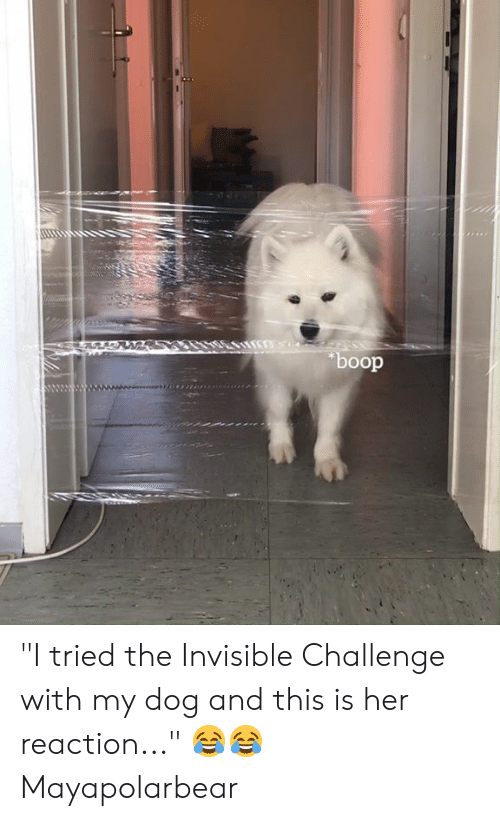 "boop: boop ""I tried the Invisible Challenge with my dog and this is her reaction..."" 😂😂  Mayapolarbear"