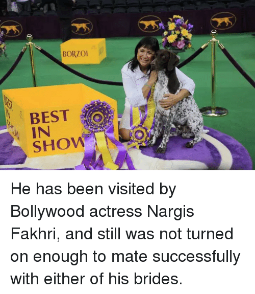 Best, Bollywood, and Been: BORZO  BEST  IN  SHOW