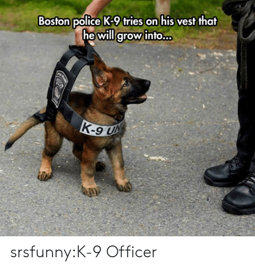 k-9: Boston police K-9 tries on his vest that  he will grow into.. srsfunny:K-9 Officer