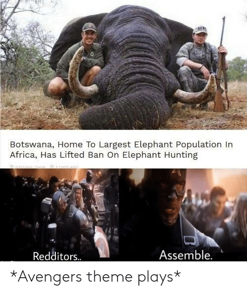 Avengers: Botswana, Home To Largest Elephant Population In  Africa, Has Lifted Ban On Elephant Hunting  Assemble.  Redditors. *Avengers theme plays*