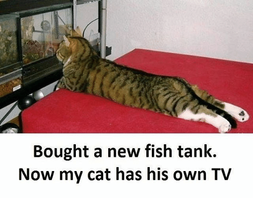 tanked: Bought a new fish tank.  Now my cat has his own TV