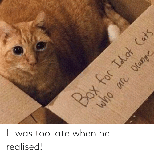 When He: Box for Idiot Cats  who are Orange It was too late when he realised!
