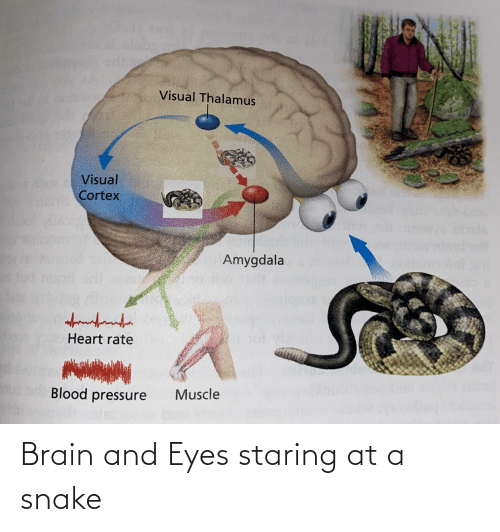 Eyes Staring: Brain and Eyes staring at a snake