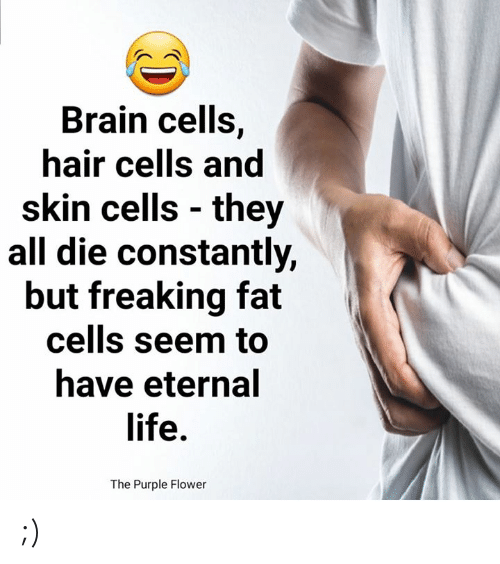 Life, Memes, and Brain: Brain cells,  hair cells and  skin cells they  all die constantly,  but freaking fat  cells seem to  have eternal  life.  The Purple Flower ;)