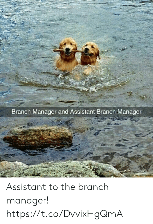 Funny, Manager, and Branch: Branch Manager and Assistant Branch Manager Assistant to the branch manager! https://t.co/DvvixHgQmA