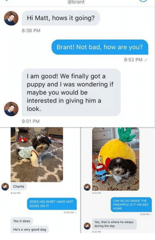 Bad, Charlie, and Dogs: @brant  Hi Matt, hows it going?  8:36 PM  Brant! Not bad, how are you?  8:52 PM  I am good! We finally got a  puppy and I was wondering if  maybe you would be  interested in giving him a  look  9:01 PM  Charlie  0-33 PM  045 PM  DOES HIS SHIRT HAVE HOT  DOGS ON IT  CAN HE GO INSIDE THE  PINEAPPLE IS IT HIS BED  HOME  35 PM  048 PM  Yes it does  Yes, that is where he sieeps  during the day  He's a very good dog  50 PM