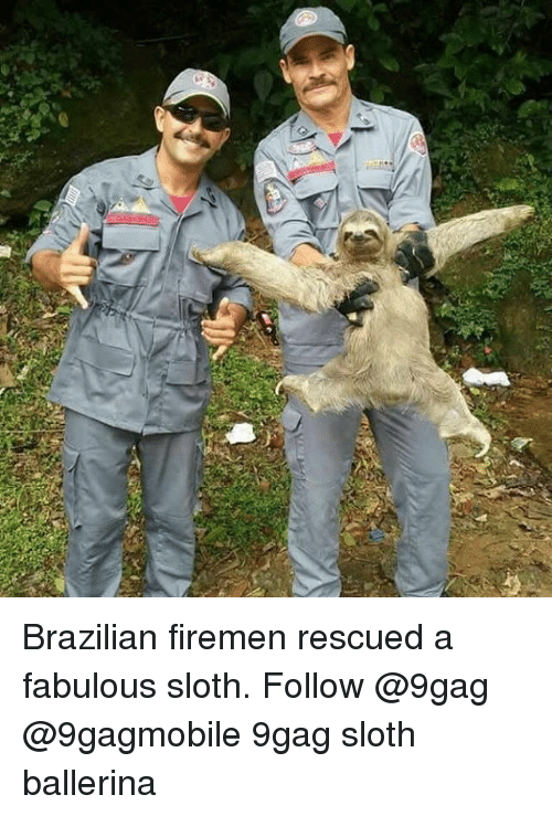 Firemen: Brazilian firemen rescued a fabulous sloth. Follow @9gag @9gagmobile 9gag sloth ballerina