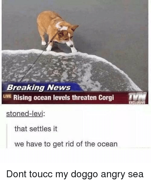 Corgi, News, and Breaking News: Breaking News  LVE Rising ocean levels threaten Corgi T  stoned-levi  that settles it  we have to get rid of the ocean <p>Dont toucc my doggo angry sea</p>
