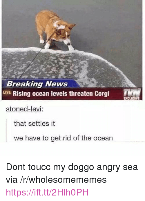 "Corgi, News, and Breaking News: Breaking News  LVE Rising ocean levels threaten Corgi T  stoned-levi  that settles it  we have to get rid of the ocean <p>Dont toucc my doggo angry sea via /r/wholesomememes <a href=""https://ift.tt/2Hlh0PH"">https://ift.tt/2Hlh0PH</a></p>"