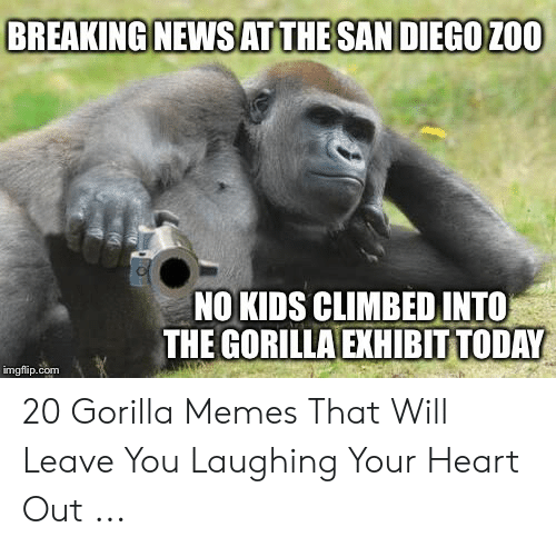 Gorilla Meme: BREAKING NEWSATTHE SAN DIEGO ZOO  NO KIDS CLIMBED INTO  THE GORILLA EXHIBIT TODAY  imgflip.com 20 Gorilla Memes That Will Leave You Laughing Your Heart Out ...