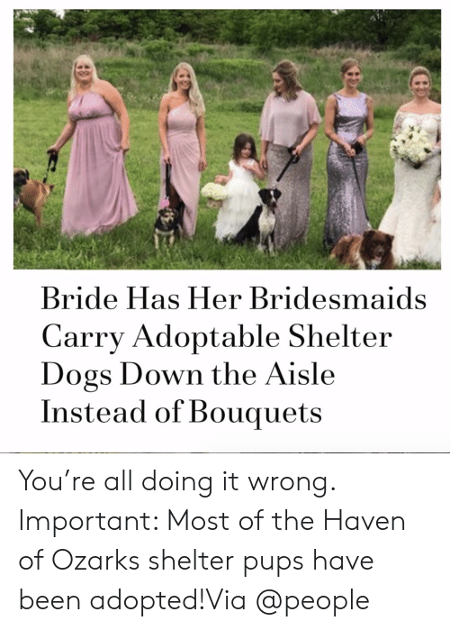 Doing It Wrong: Bride Has Her Bridesmaids  Carry Adoptable Shelter  Dogs Down the Aisle  Instead of Bouquets You're all doing it wrong. Important: Most of the Haven of Ozarks shelter pups have been adopted!Via @people