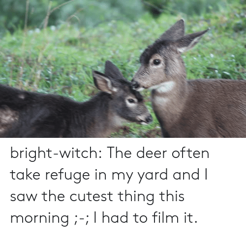 refuge: bright-witch: The deer often take refuge in my yard and I saw the cutest thing this morning ;-; I had to film it.