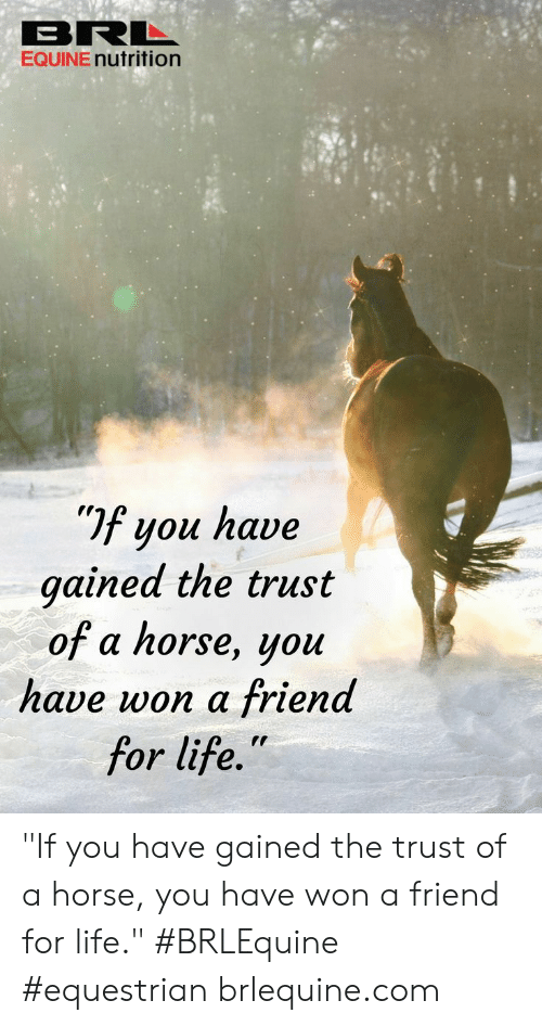 "Life, Horse, and Com: BRL  EQUINE nutrition  If you have  gained the trust  of a horse, you  have won a friend  for life."" ""If you have gained the trust of a horse, you have won a friend for life."" #BRLEquine #equestrian  brlequine.com"