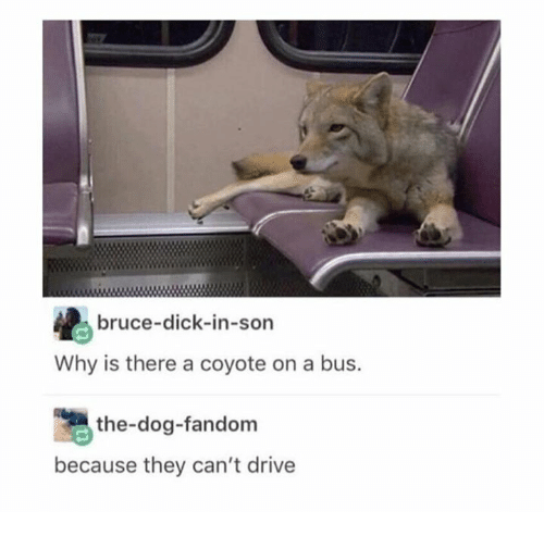 Coyote, Dick, and Drive: bruce-dick-in-son  Why is there a coyote on a bus.  the-dog-fandom  because they can't drive