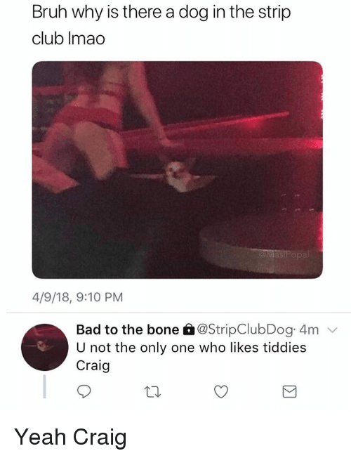 Bad, Bruh, and Club: Bruh why is there a dog in the strip  club Imao  ast  4/9/18, 9:10 PM  Bad to the bone â@StripClubDog 4m  U not the only one who likes tiddies  Craig Yeah Craig