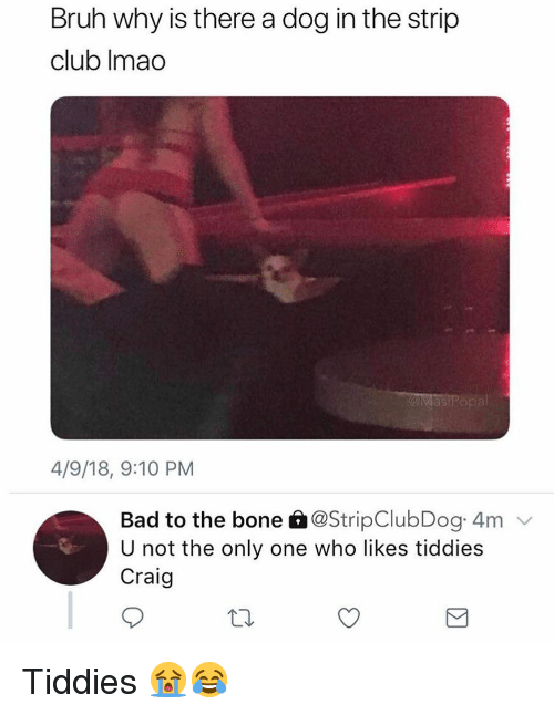 Bad, Bruh, and Club: Bruh why is there a dog in the strip  club Imao  as  4/9/18, 9:10 PM  Bad to the bone â@StripClubDog 4m  U not the only one who likes tiddies  Craig Tiddies 😭😂