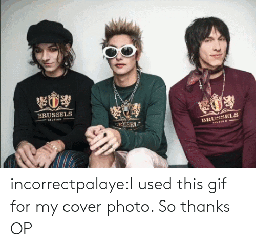 Gif, Tumblr, and Blog: BRUSSELS  BRUSSELS incorrectpalaye:I used this gif for my cover photo. So thanks OP