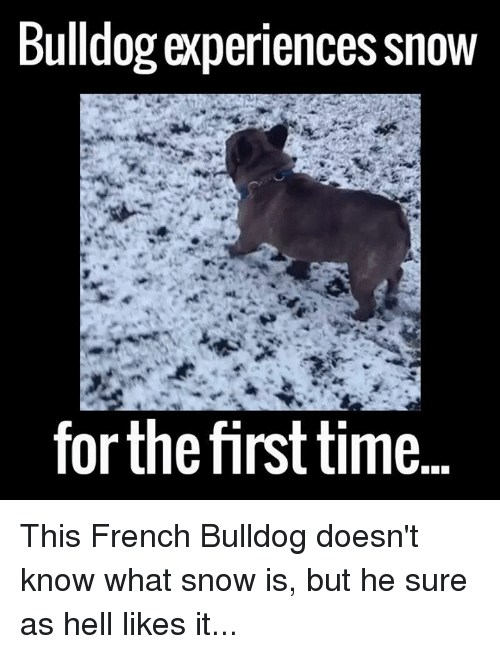French Bulldogs: Bulldog experiences Snow  forthe first time This French Bulldog doesn't know what snow is, but he sure as hell likes it...