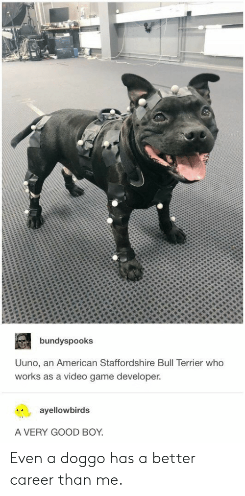 American, Game, and Good: bundyspooks  Uuno, an American Staffordshire Bull Terrier who  works as a video game developer.  ayellowbirds  A VERY GOOD BOY Even a doggo has a better career than me.