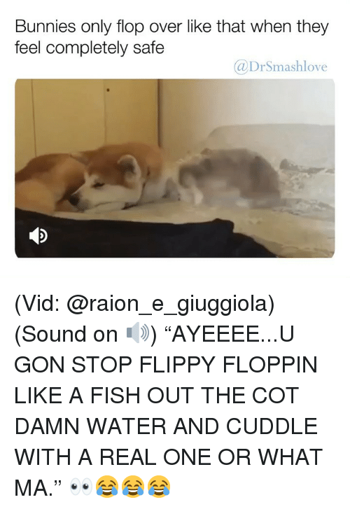 "Cuddle With: Bunnies only flop over like that when they  feel completely safe  @DrSmashlove (Vid: @raion_e_giuggiola) (Sound on 🔊) ""AYEEEE...U GON STOP FLIPPY FLOPPIN LIKE A FISH OUT THE COT DAMN WATER AND CUDDLE WITH A REAL ONE OR WHAT MA."" 👀😂😂😂"