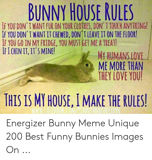 BUNNY HOUSE RULES IF YOU DON'T WANT FURON YOUR LOİHES DON' T TOUCH
