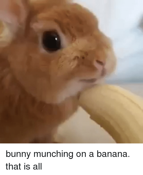Banana, Bunny, and All: bunny munching on a banana. that is all