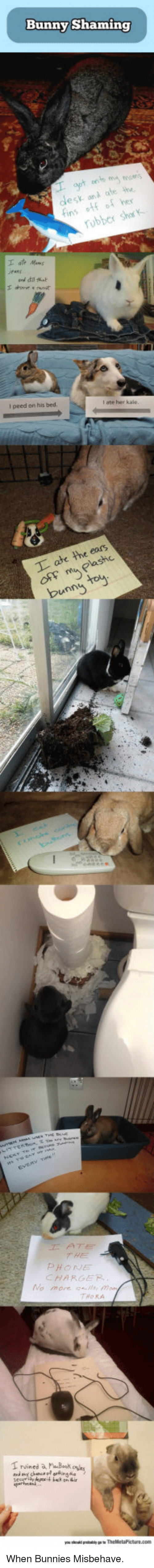 Bunnies, Phone, and Her: Bunny Shaming  onA ate ihe  otf of her  esy  robber shc  l peed on his bed.  PHONE  CHARGER <p>When Bunnies Misbehave.</p>